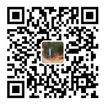 株洲云龙示范区绿光苗圃,造型罗汉松批发,株洲造型五针松种植